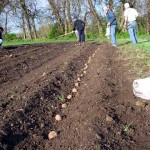2010 Springton Planting